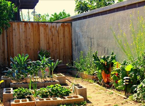 Kebun mini di belakang rumah