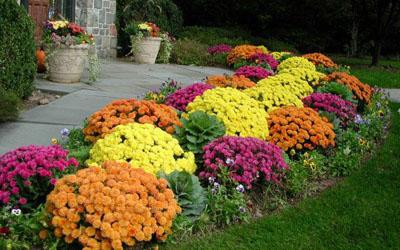 Halaman Depan Rumah Bunga Warna Warni
