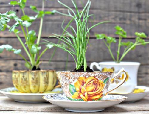 Cangkir bekas untuk pot di taman rumah minimalis - Homedit