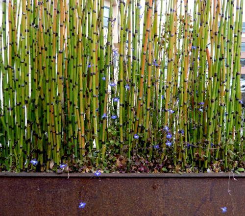 Pagar bambu hidup tampak alami dan asri - Retyulotos