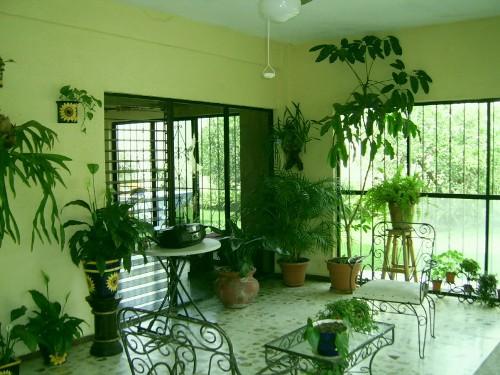 Taman indoor tropis dengan media tanam pot